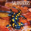 Book Review:  Salamanders
