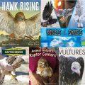 STEM Reading List: Birds of Prey